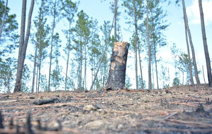 deforestacion frontera haiti