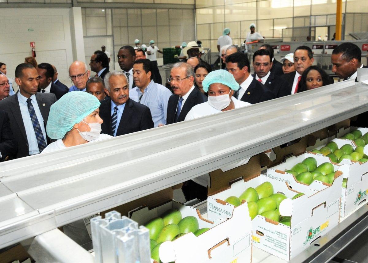 agricultura mango