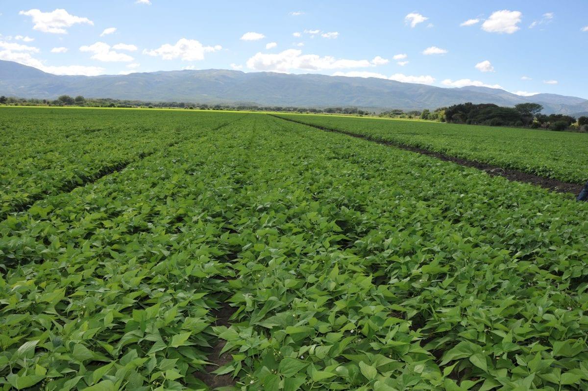 agricultura riego san juan