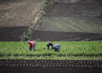 Agricultura, sistemas alimentarios