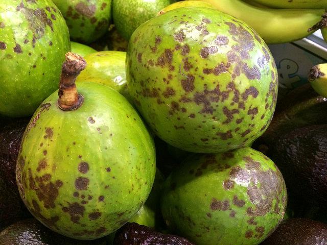 Costa Rica busca proteger a sus productores locales de la plaga.