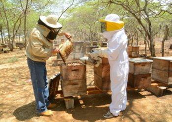 Los apicultores ralentizaron su faena debido a la cuarentena impuesta por el Gobierno.