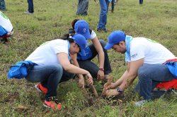 En estas jornadas, el personal del Grupo Popular recibe habitualmente la asistencia de voluntarios de la comunidad y de técnicos del Plan Sierra.