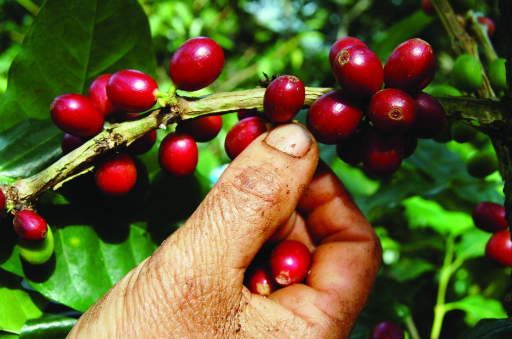 café valdesia 2