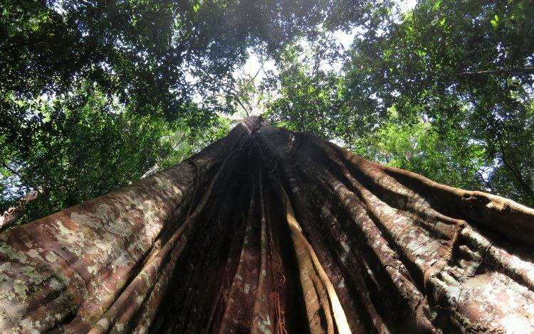 foto de Brasil quiere vender el 15% del Amazonas a fondos de inversión