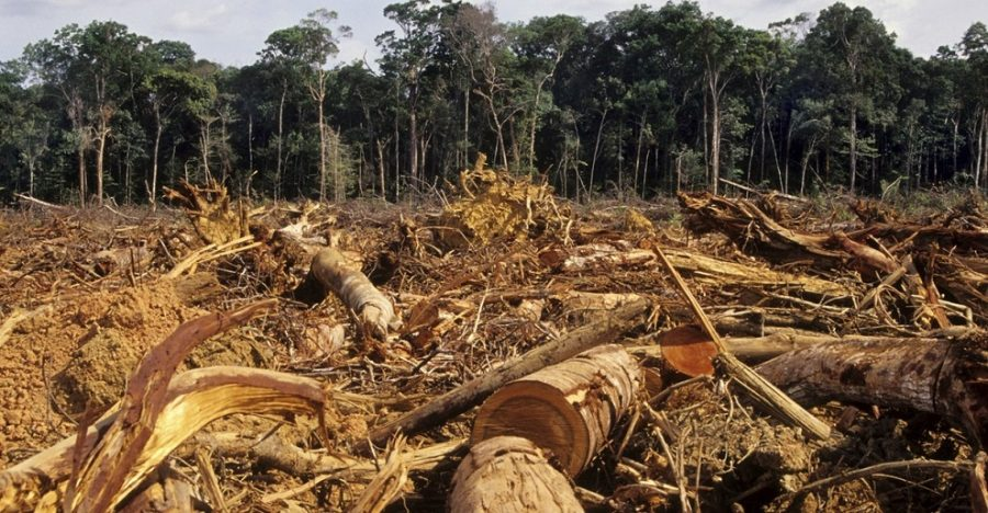 fao deforestación en al