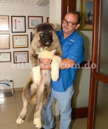 José Raúl Nova, director de Servican Pet Center