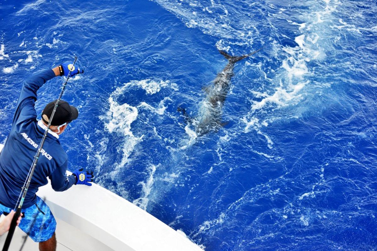 pesca deportiva en marina cap cana