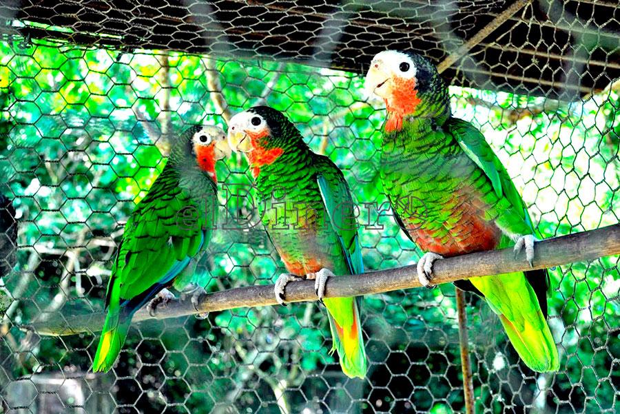 Animales ex ticos la vida silvestre llevada al hogar for Imagenes de jardines exoticos