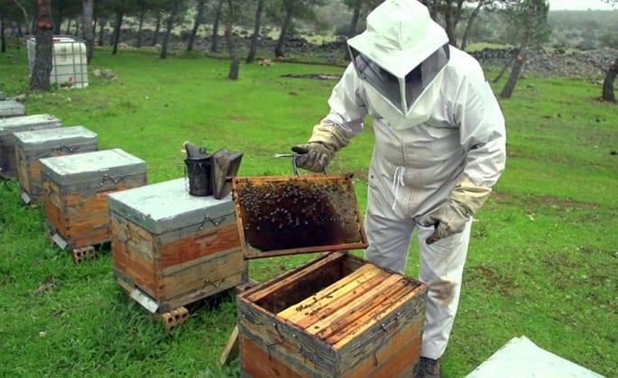 En el país aún se crian abejas con métodos rudimentarios, por lo que el sector debe modernizarse.