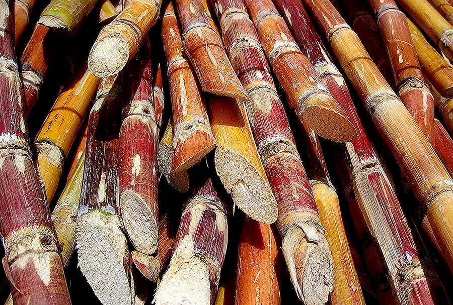 El azúcar que se produce en República Dominicana es derivado de caña.