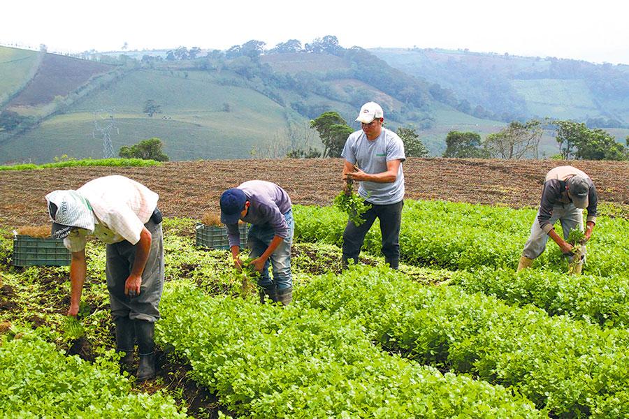 empleos agropecuaria dominicana