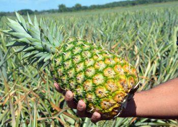 En 2019 República Dominicana exportó frutas, cortezas de agrios (cítricos), melones o sandías por un valor de US$313.4 millones.