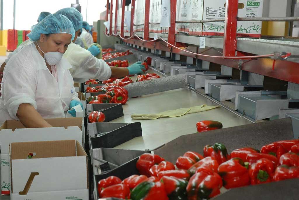 En los primeros siete meses de este año República Dominicana exportó US$2,739.5 millones en bienes hacia Estados Unidos.