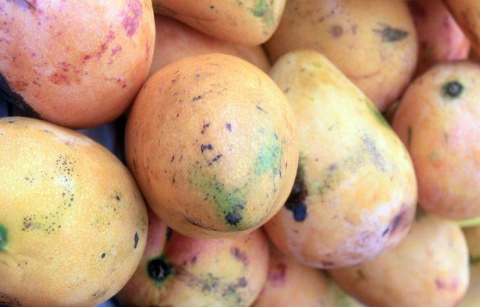 mangos dominicano