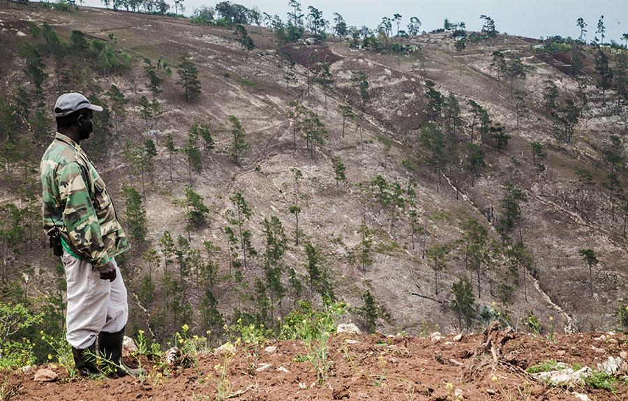 muerte por mil cortes deforestacion