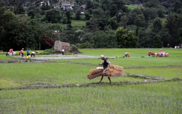 ocde fao auguran precios agricolas estables proxima decada