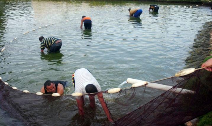 La acuicultura es la alternativa más eficiente para aumentar la producción de especies acuíferas.