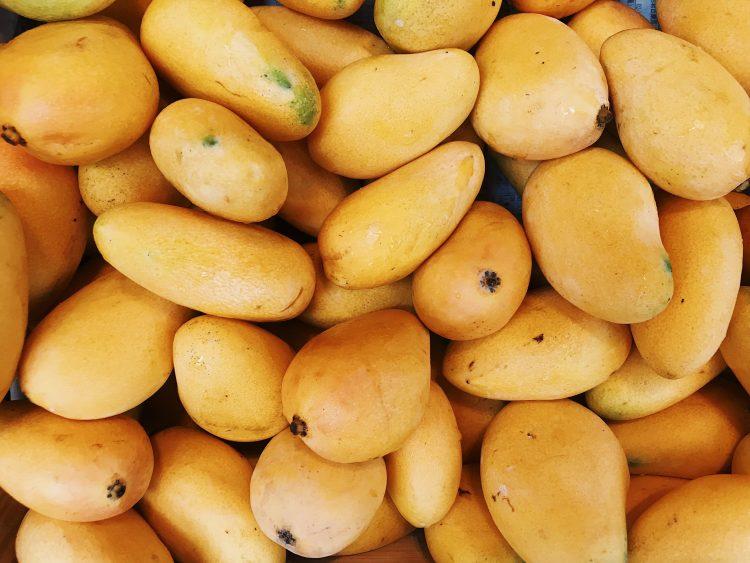 Mangos, cultivo de mango