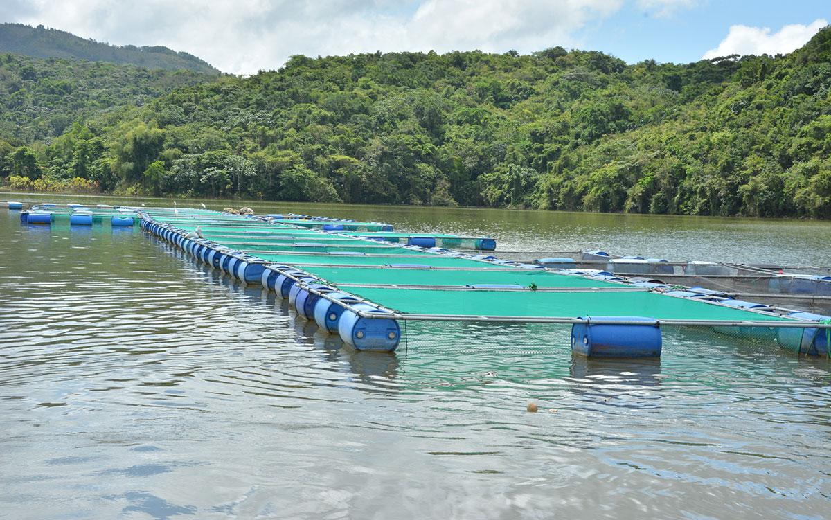 piscicultura cotui