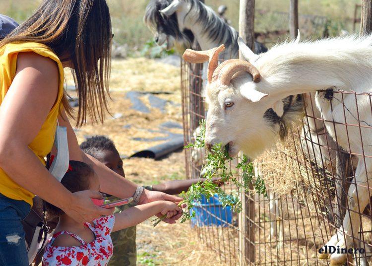 Los niños pueden estar en el campo con aire limpio, además tener contacto directo con los animales.