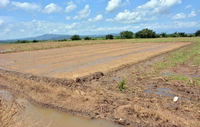 ruta turistica de arroz 3