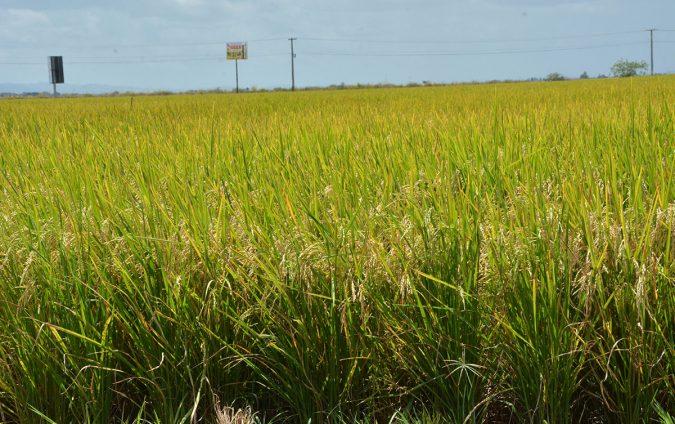 ruta turistica de arroz 5