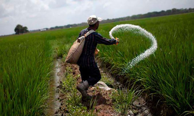ruta turistica de arroz 8