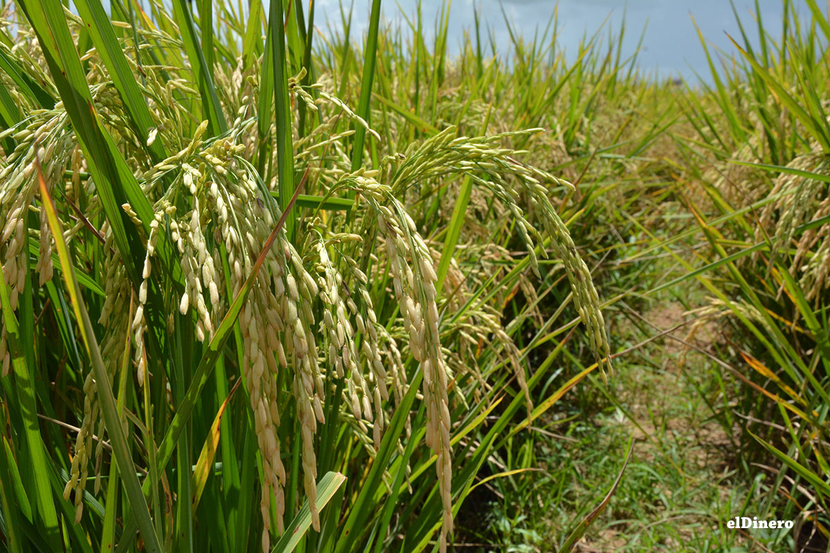 ruta turistica de arroz