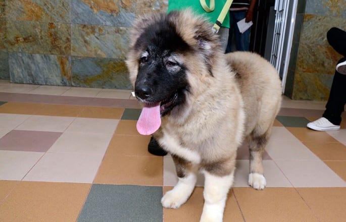 veterianaria-mascota-perro